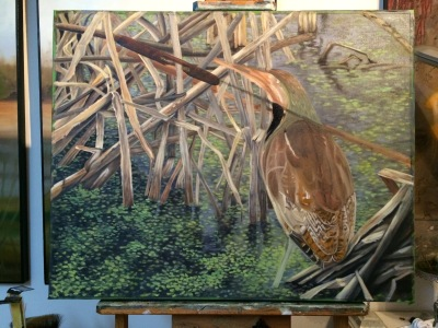 Green Heron--midway done.