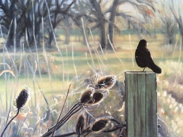 """Morning Sunbather--Red winged blackbird--18""""x24"""" oil on gallery wrap canvas"""