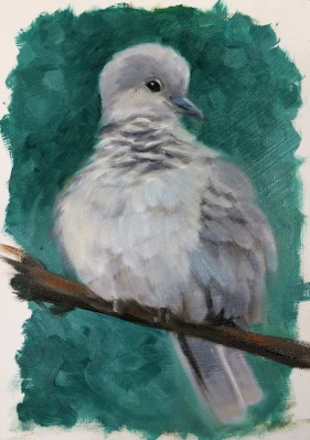 E_Eurasian Dove
