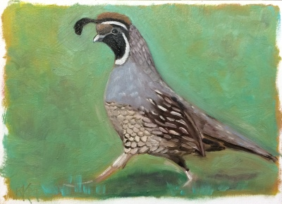 Q is for California Quail