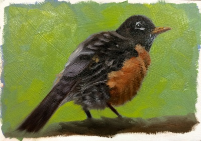 Male American Robin--a different view ;-)
