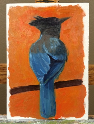 An unfinished Steller's Jay