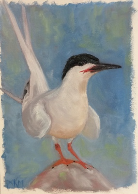 T is for Tern