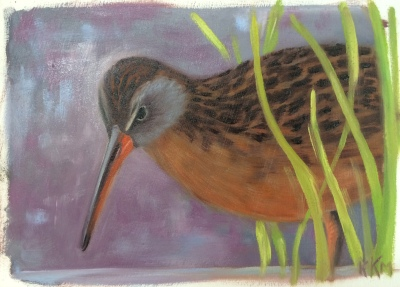 V Is For Virginia Rail