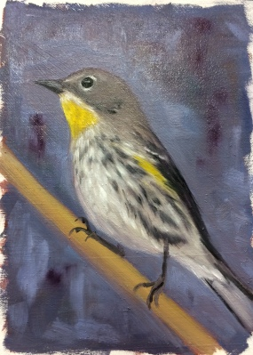 Y is for Yellow Rumped Warbler_painted Oct 15 and 16