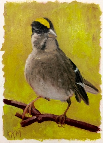 Z is for Zonotrichia Atricapilla AKA Gold Crowned Sparrow
