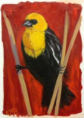 X is for Xanthocephalus xanthocephalus--Yellow-Headed Blackbird.