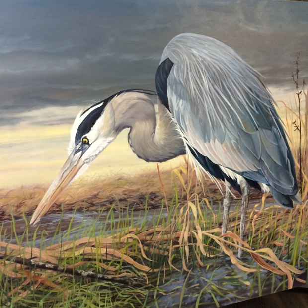 Blue Heron almost done